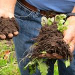Pacho's soil